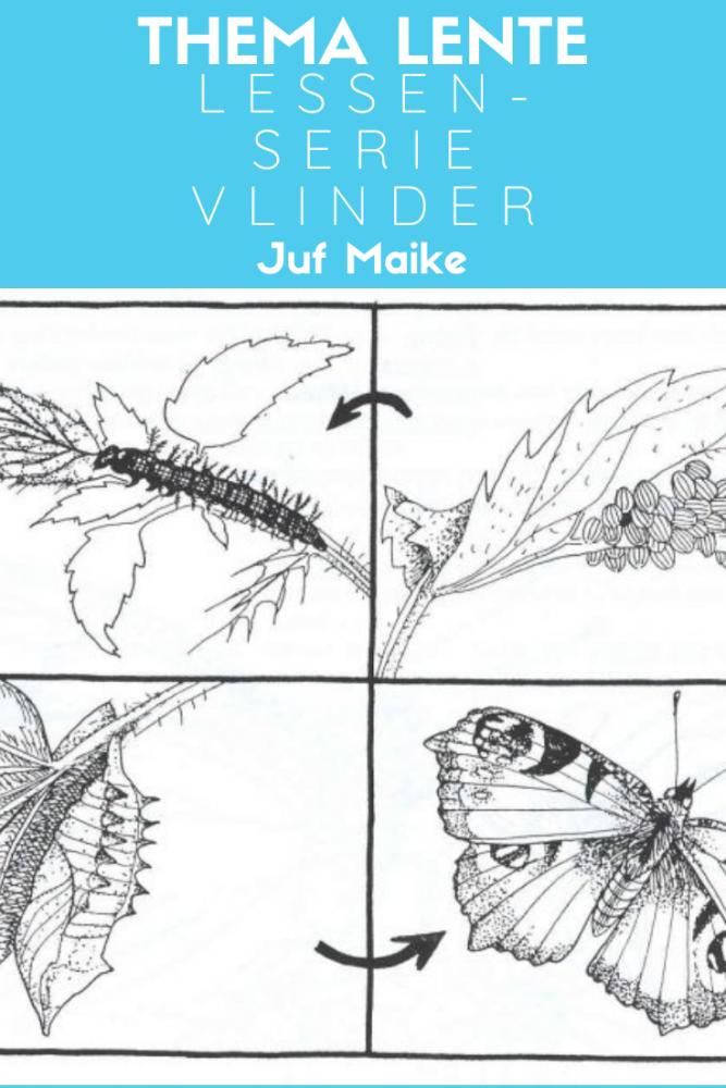 Lessenserie vlinder passend bij thema lente
