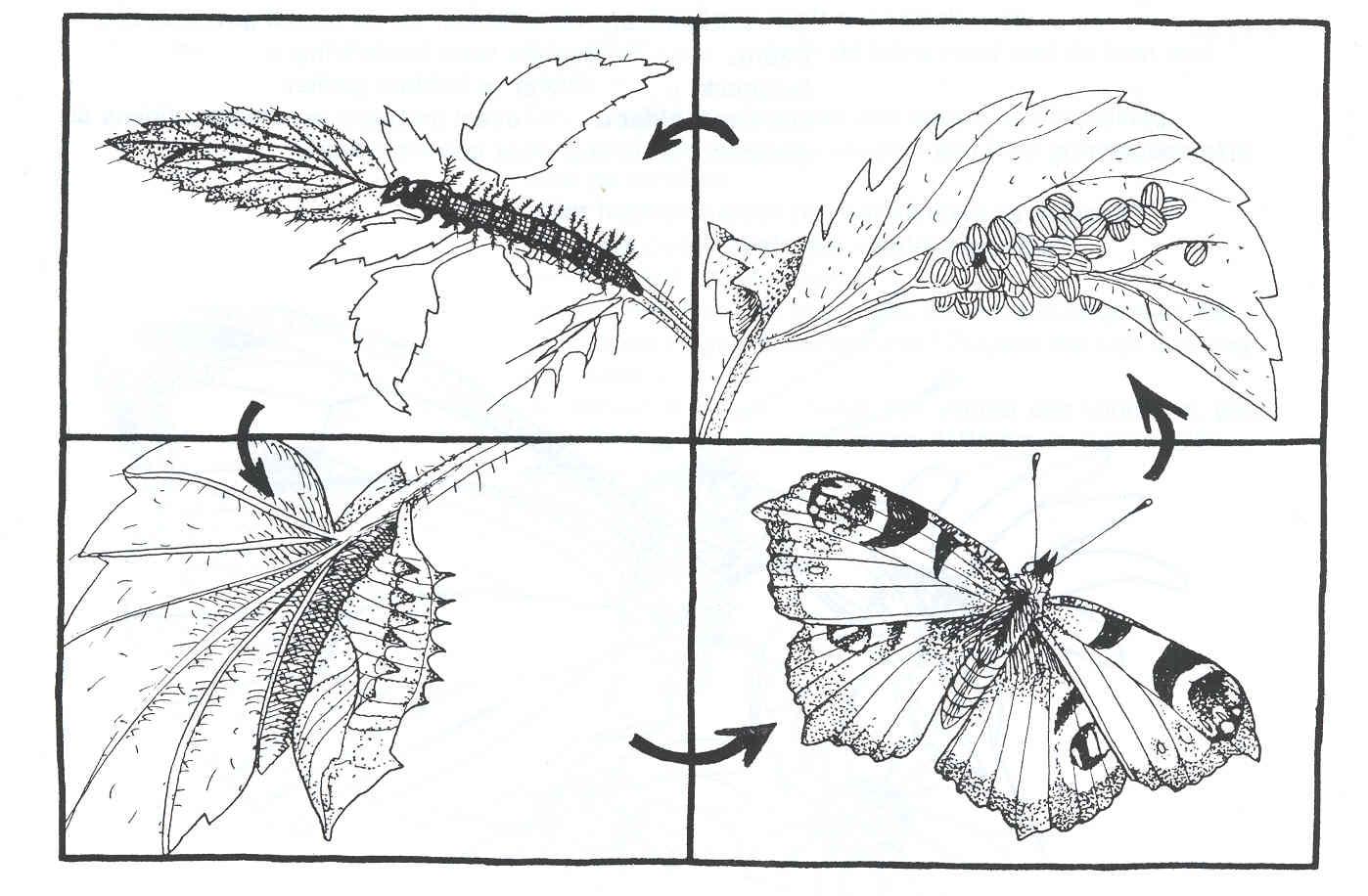 Kleurplaten Vlinders En Rupsen.Kleurplaat Lente Vlinder