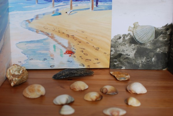 Kijktafel schelpen