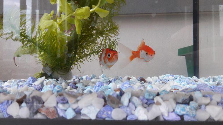 Aquarium in de klas