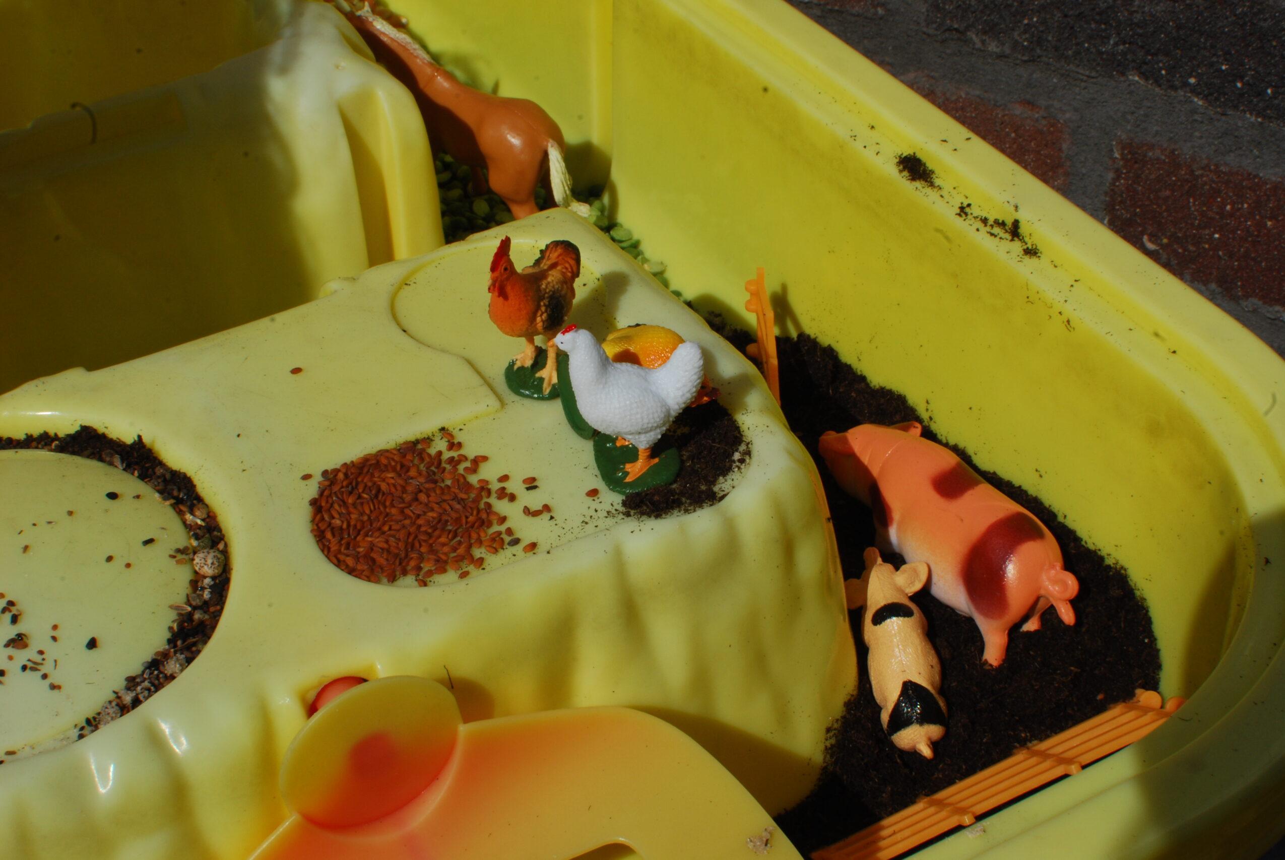 Varkens in de modder. Kippen krijgen voer.