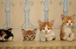 Kedi: de katten van Istanboel