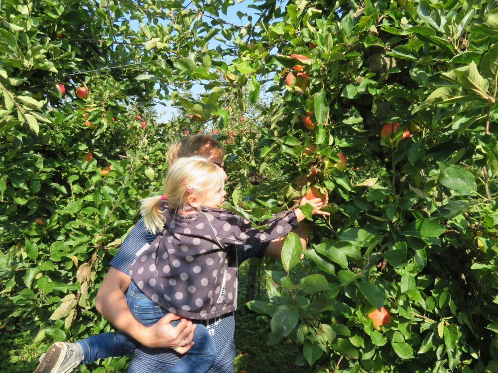 Uittip: appels plukken