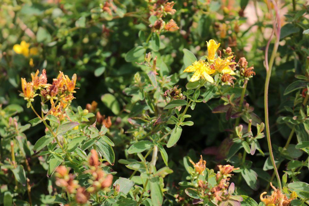 Floral elixer