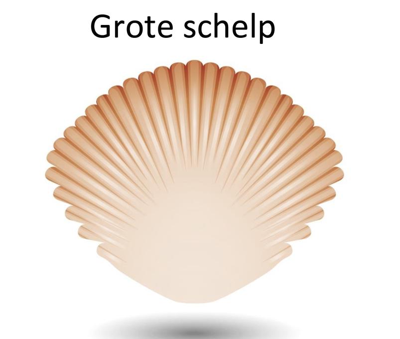 Grote of kleine schelp