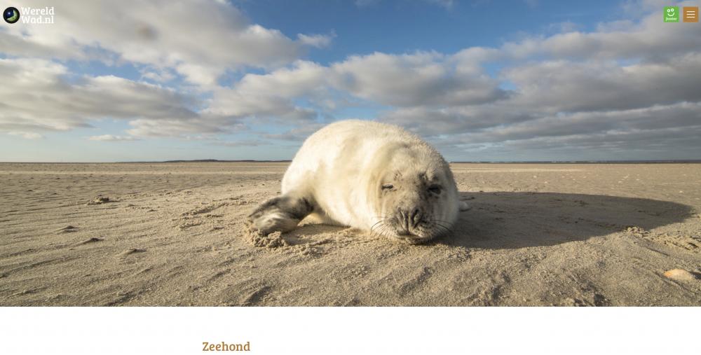 Zeehond wereldwad.nl