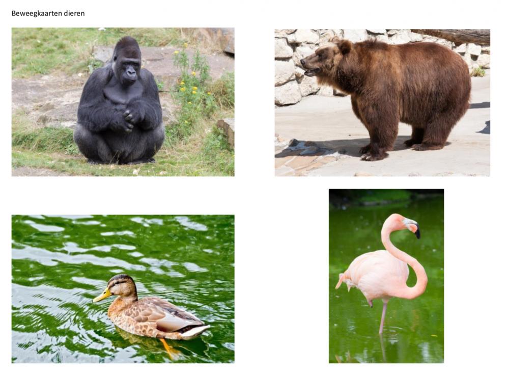 beweegkaarten dieren