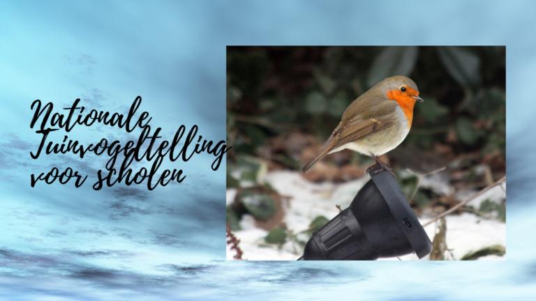 Nationale Tuinvogeltelling voor scholen, doe mee